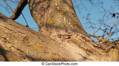 Thick tree trunk close up, camera moving up, slider motion in 4k 60 fps 60p