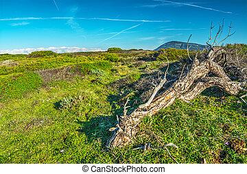 tree trunk in a green meadow
