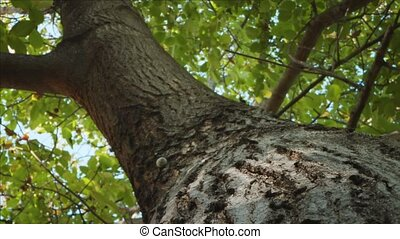 Tree trunk in camera motion close up footage