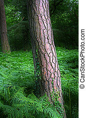Tree trunk in English woodland surrounded by ferns