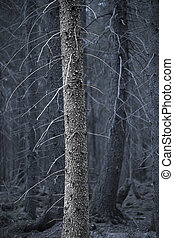 Tree trunk in spooky forest