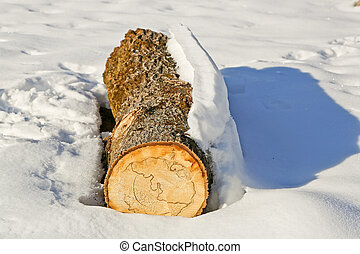 Tree trunk in the snow