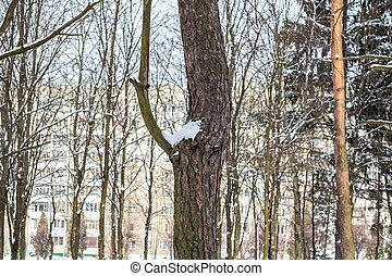 Tree trunk in the snow on background of building