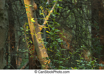 Tree trunk lit by sun - Tree trunk in forest singled out by...
