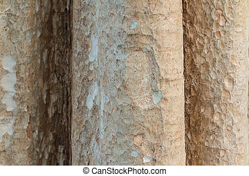 Tree trunk. May use as a background. Closeup