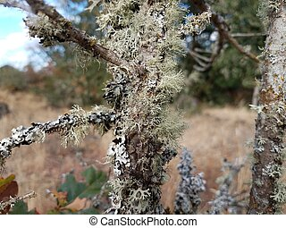 tree trunk or branch with green lichen or moss
