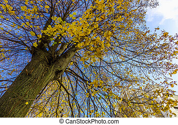Tree Trunk with Branches in Autumn Leaves