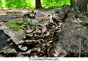 Tree Trunk with Fungus