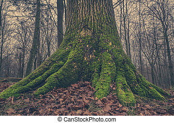 Tree trunk with moss in the forest