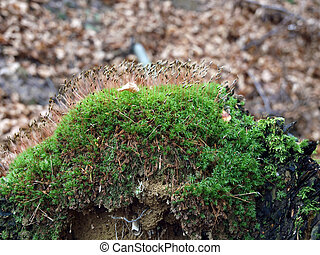 Tree-trunk with moss