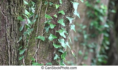 Tree Trunk With Vines And Leaves