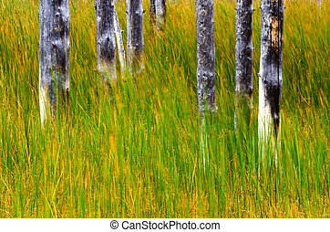 Tree Trunks and Grass in Yellowstone National Park