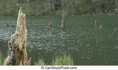 Tree Trunks and Pond Water