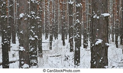 tree trunks christmas tree winter forest pine nature landscape beautiful