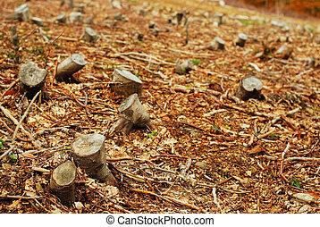 Tree trunks, deforestation area in romania.