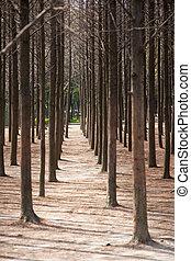 Tree trunks in park