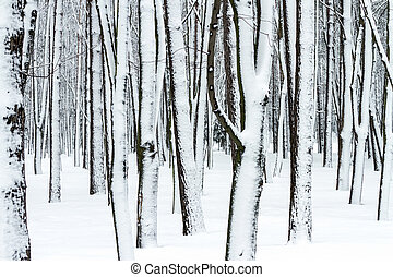 tree trunks in winter forest covered with snow