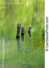 Tree trunks sticking out of the river