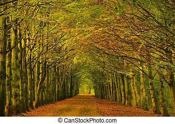 Tree tunnel in a forest in autumn