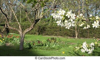 Tree twig blooms and flowers in spring season garden.