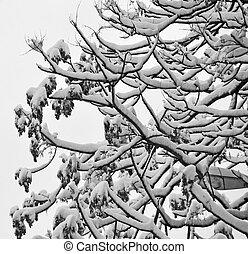 tree under snow in winter season