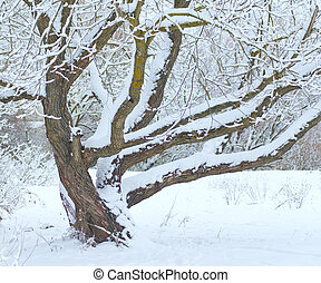 Tree under snow in winter time