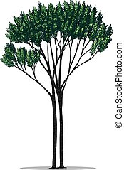 Tree vector by hand drawing