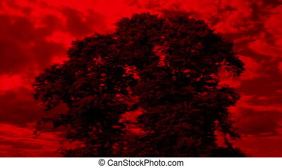 Tree With Apocalyptic Red Sky