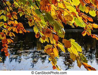 Tree with Autumn Leaves by Lake