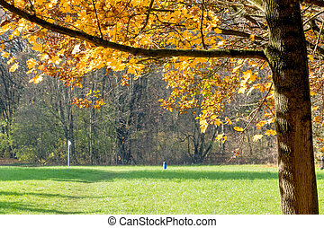tree with autumn leaves