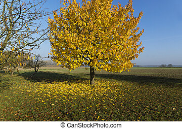 tree with beautiful yellow leaves in autumn