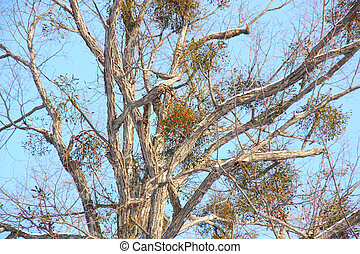 tree with berries on branches in winter against the blue sky
