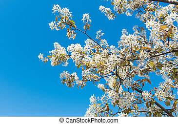 tree with blossoming white flowers