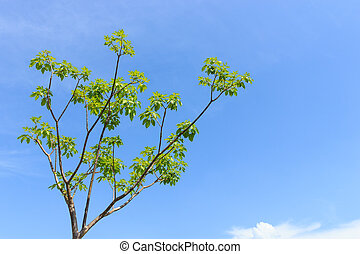 tree with blue sky