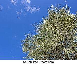 tree with bluesky wall