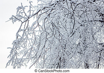 Tree with branches under the snow in winter