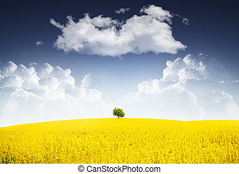Tree with canola