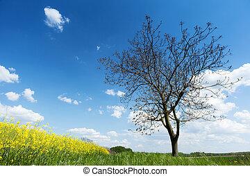 Tree with canola field