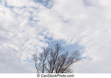 tree with clouds against a blue sky.
