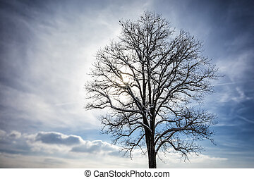 Tree with clouds in winter