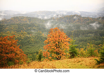 Misty autumn background