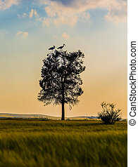 tree with cranes at sunset