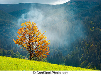 tree with golden foliage on grassy hillside in smoke....