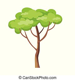 Tree with Green Leaves.