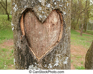 Tree with heart graven in bark