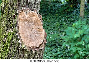 tree with interface - tree maintenance, garden maintenance...