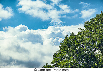 Tree with leaves on blue sky