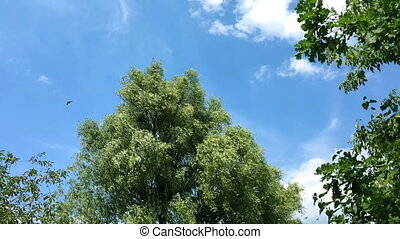 Tree with lush foliage sways in the wind. Birds fly beside...