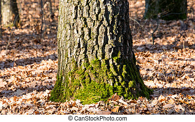 tree with moss in a forest