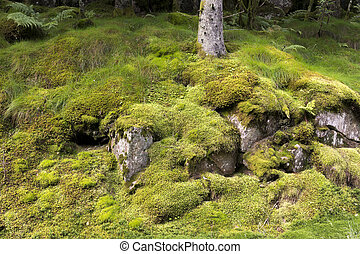 tree with moss Norway